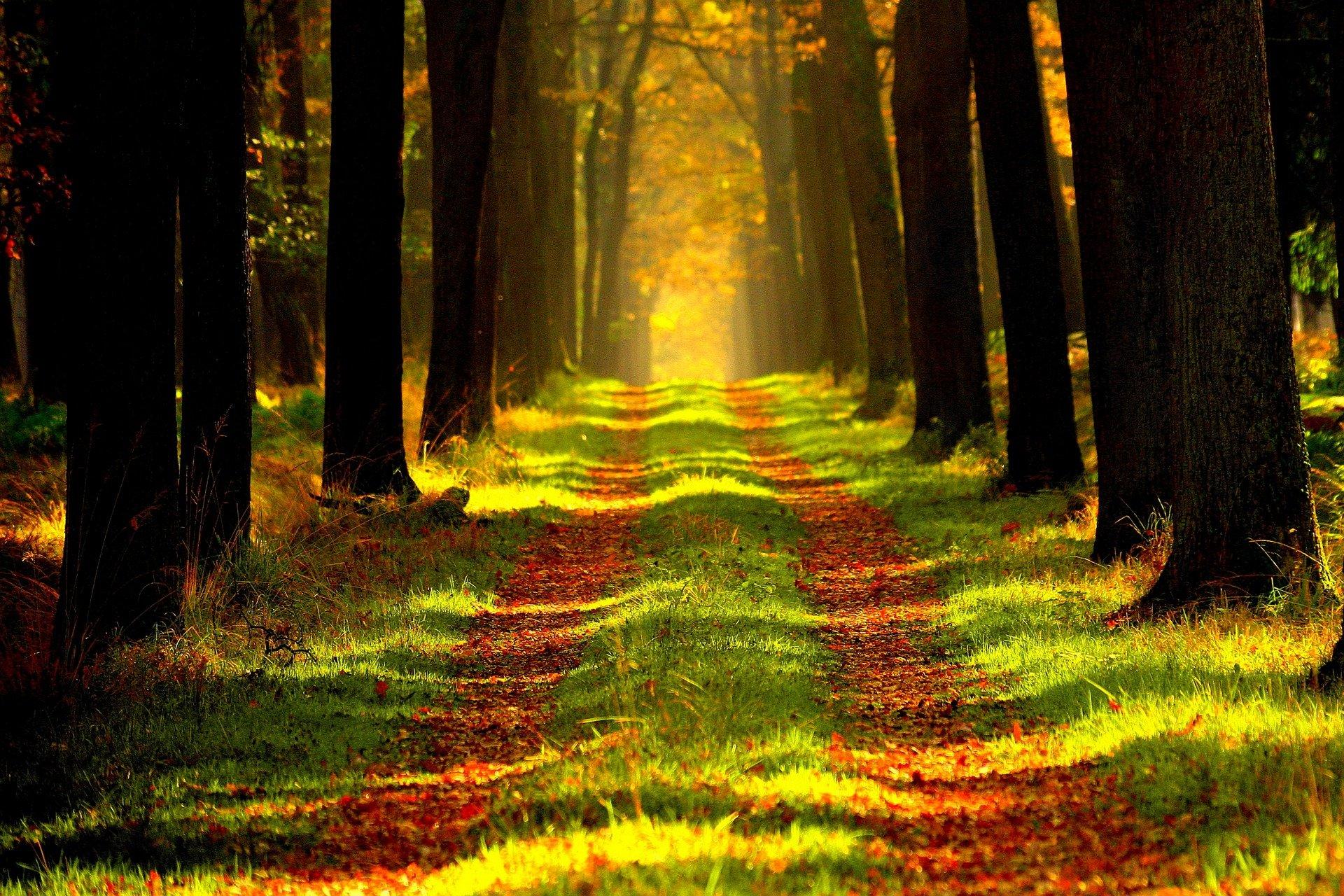 Stille Erkundung in Wald und Feld: Draußen bei sich sein – bei sich draußen sein